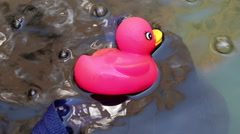 Rubber duck in the water Stock Footage