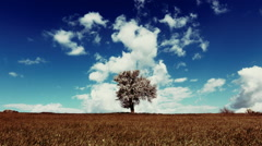 Spring/summer landscape tree on meadow sky and clouds timelapse Stock Footage