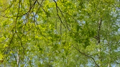 Stock Video Footage of Panoramic background of fresh green trees