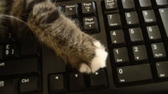 Tabby kitten on keyboard Stock Footage