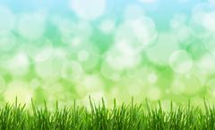 Green grass in a field against blurred natural background. Stock Photos