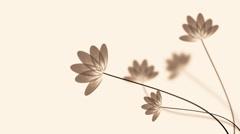 Transparent lotus Stock Footage