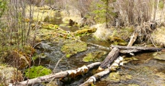 Stock Video Footage of 4K Long Duration Footage Swampy Creek