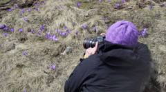 Female photographer taking shots of spring flowers Stock Footage
