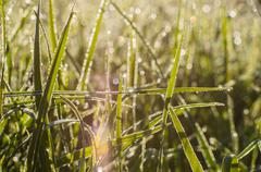 Natural hoar-frost grass with drops at sunny morning Stock Photos