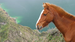 Wild horse head close up against turquoise crater lake Stock Footage