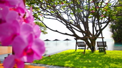 Natural swimming pool with orchids. Stock Footage