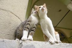 """Stock Photo of """"Lean on Me"""" Kitten Friends"""