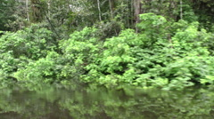 Water level immersive shot in Amazon jungle while navigating, stabilized shot Stock Footage