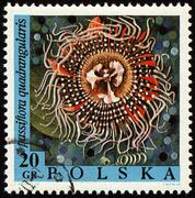 Passion flower on post stamp Stock Photos