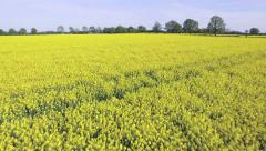 Canola Field Aerial View Stock Footage