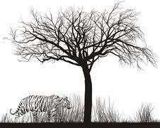 Tiger in tall grass Stock Illustration
