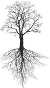 Walnut tree with roots Stock Illustration