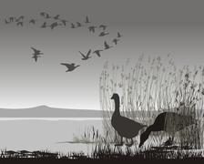 Wild geese, delayed migrating - stock illustration
