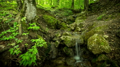 Waterfall rill lash down. Green forest tree. Nature background. 4K Time Lapse - stock footage