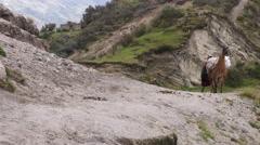 QUILOTOA, ECUADOR - 5 MARCH 2015: Peasant woman with lama in Ecuadorian Andes in - stock footage