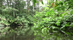 Low angle shot from moving boat of dense vegetation in Amazonian jungle, Stock Footage