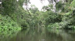 Water level immersive shot in Amazon jungle while navigating stabilized shot Stock Footage