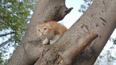 Little red kitten is scared sitting on branch of tree Stock Footage