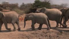 Elephants walking to watering hole Stock Footage