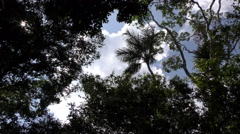 Sunrays piercing trough dense vegetation in Amazonian jungle Stock Footage