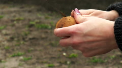 Cleaning of potato tuber Stock Footage