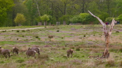 Deers in the afternoon Stock Footage
