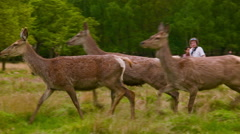 Three Deers in the picture Stock Footage