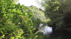 Rainforest River on the Island of GUAM, USA Stock Footage