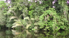 Typical vegetation along Cuyabeno river in Ecuadorian Amazonia, traveling shot Stock Footage