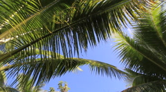 Beautiful Palm Branches on the Island of GUAM, USA Stock Footage