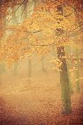 Stock Photo of misty autumn park in foggy day