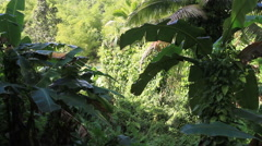 Jungles of GUAM Stock Footage