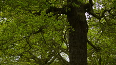 Tilt shot on a tree at afternoon Stock Footage
