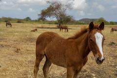 Horses on tropical island - stock photo