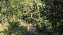 Greenery in the Island Jungle in GUAM, USA Stock Footage