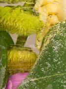 organic abstraction fragrant flower chrysanthemum - stock photo