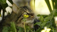 Cat watching birds Stock Footage