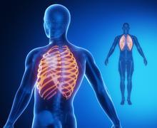 RIBS bone anatomy x-ray scan Stock Illustration