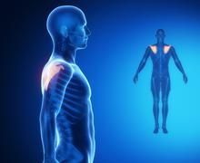 SCAPULA bone anatomy x-ray scan - stock illustration