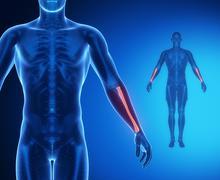 RADIUS bone anatomy x-ray scan - stock illustration