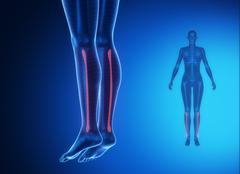 FIBULA blue x--ray bone scan - stock illustration