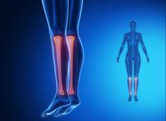 Tibia anatomy medical scan - stock illustration