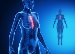STERNUM blue x--ray bone scan Stock Illustration