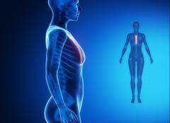 STERNUM blue x--ray bone scan - stock illustration