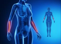 RADIUS  blue x--ray bone scan - stock illustration