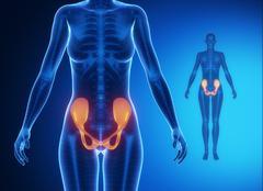 PELVIS blue x--ray bone scan - stock illustration