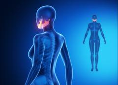MANDIBLE blue x--ray bone scan Stock Illustration