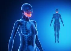MANDIBLE blue x--ray bone scan - stock illustration