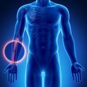 Male bone anatomy radius - stock illustration